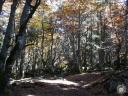 moliere.57: Sentier en sous-bois aux couleurs de l?automne