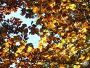 moliere.78: Couleurs d?automne