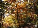 moliere.79: Sentier d?automne