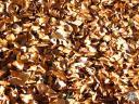 moucherotte.033: Les feuilles mortes se?