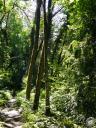 chartreuse052: Sous bois ombragé