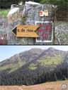 pyrenees0409: Sous le col de Riou, alpage ensoleillé