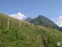pyrenees0499: