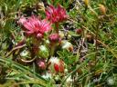 queyras085: Végétation alpine au lac du Lauzon