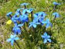 queyras321: Bleuets au lac Foréant  - Queyras
