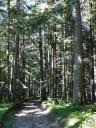 vercors009: Sentier dans le bois de Claret